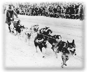 A Team of Dogs Pulling a Sled